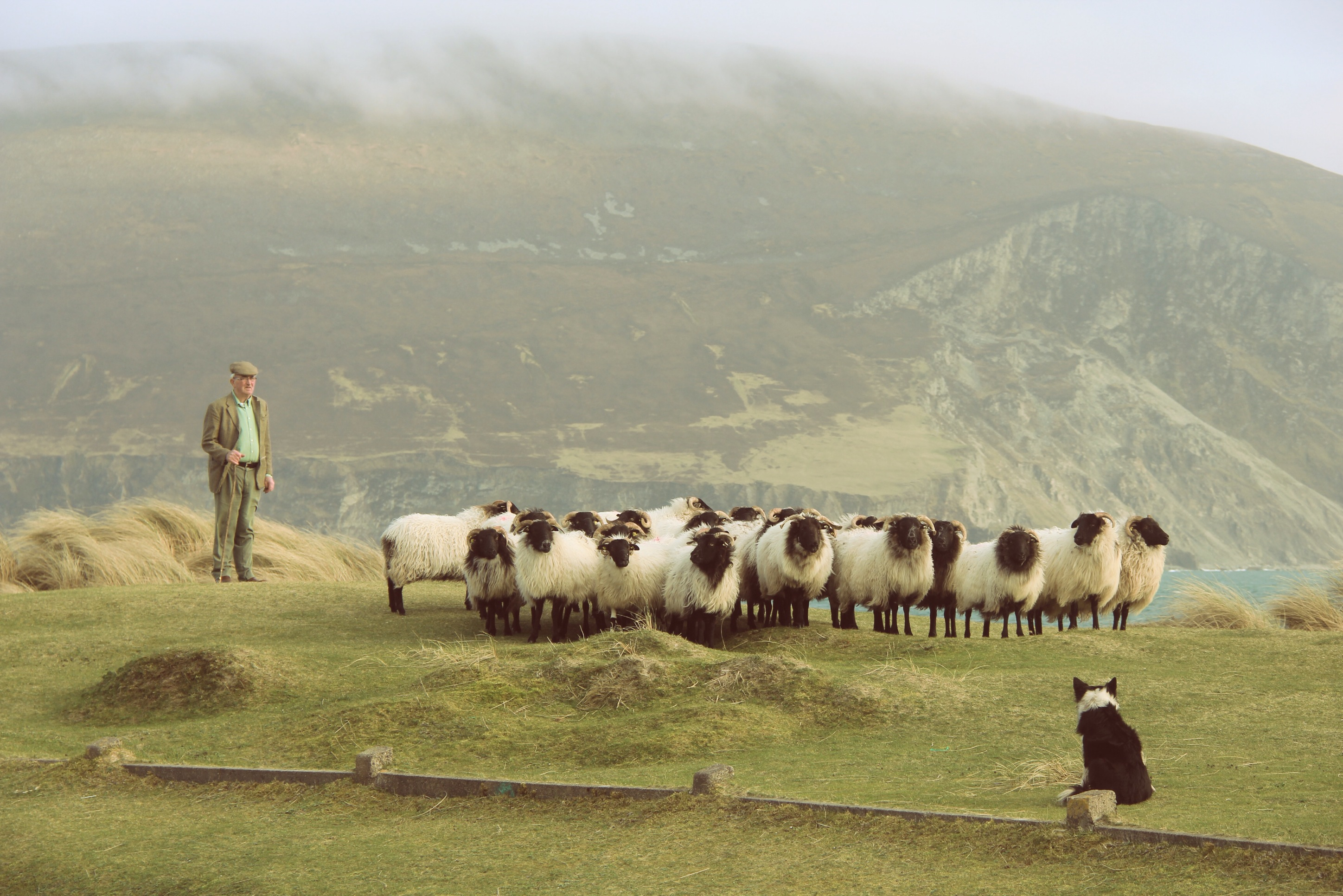 Martin Calvey and his flock of Blackface Achill Island lamb, his own Achill Mountain Lamb
